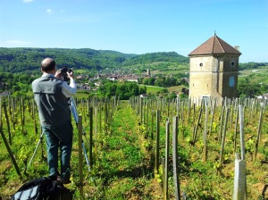 Tour du Curon vineyard
