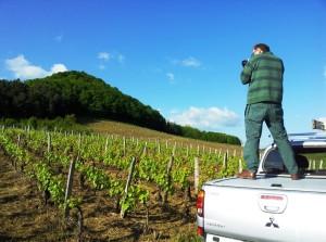 l'Etoile vineyards