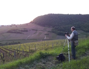 Preparing for sunset in the vineyards of Château-Chalon ©Wink Lorch