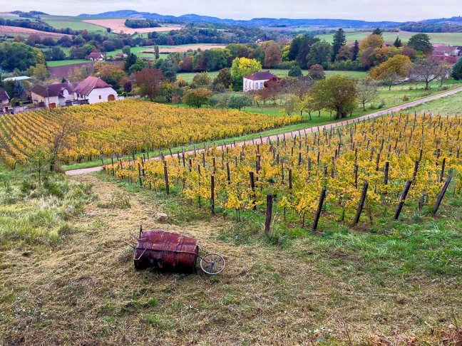 St-Lothain Jura vineyards